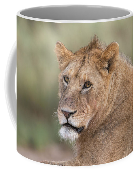 Animal Coffee Mug featuring the photograph Portrait Of A Lioness, Panthera Leo by Tom Murphy