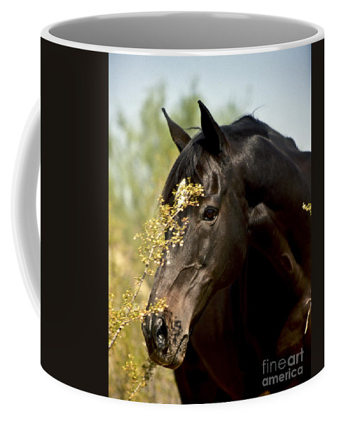Horse Coffee Mug featuring the photograph Portrait of a Thoroughbred by Kathy McClure