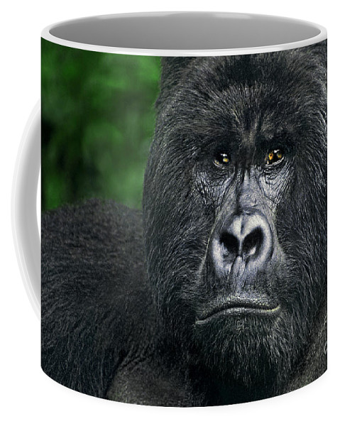 Africa Coffee Mug featuring the photograph Portrait Of A Wild Mountain Gorilla Silverbackhighly Endangered by Dave Welling