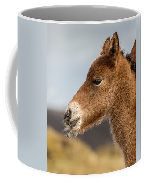 Photography Coffee Mug featuring the photograph Portrait Of Newborn Foal by Panoramic Images
