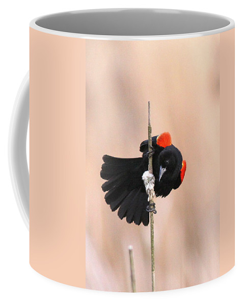 Red-winged Blackbird Coffee Mug featuring the photograph Posing For The Lady - Red-winged Blackbird by Travis Truelove