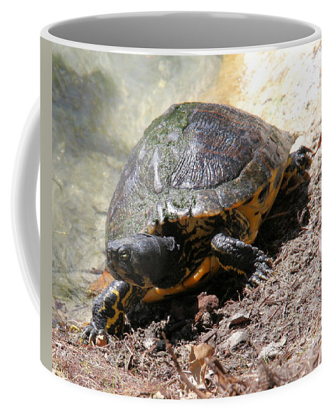 Turtle Coffee Mug featuring the photograph Possible Cooter Turtle by Doris Potter