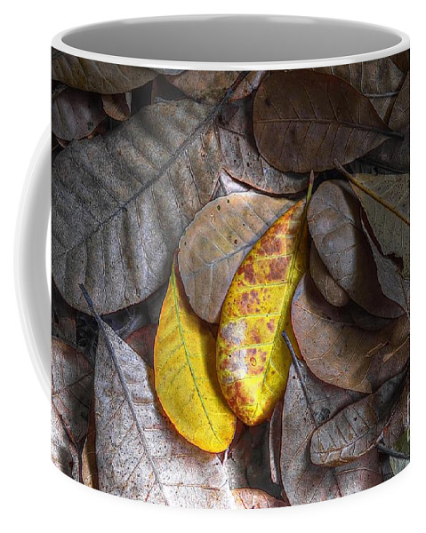 Michelle Meenawong Coffee Mug featuring the photograph Pot-pourri by Michelle Meenawong