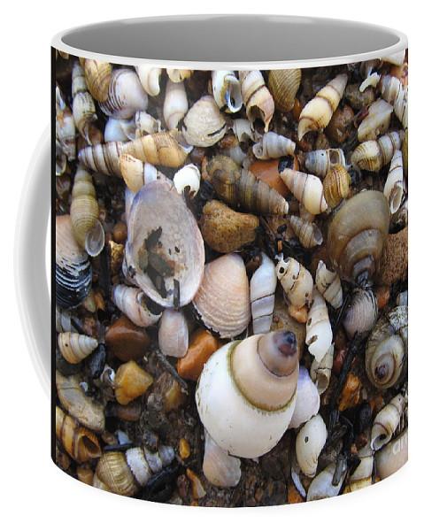 Potomac River Shore Potomac River Shells Potomac Invertibrates Clams Snails Spiral Shells Shellscape Shoreline Riverscapes Substrates Coffee Mug featuring the photograph Potomac Shellscape by Joshua Bales