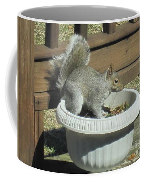 Wildlife Coffee Mug featuring the photograph Potted Squirrel by Tara Shalton
