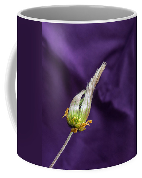Alberta Coffee Mug featuring the photograph Prairie Smoke About To Unfrul by Douglas Barnett