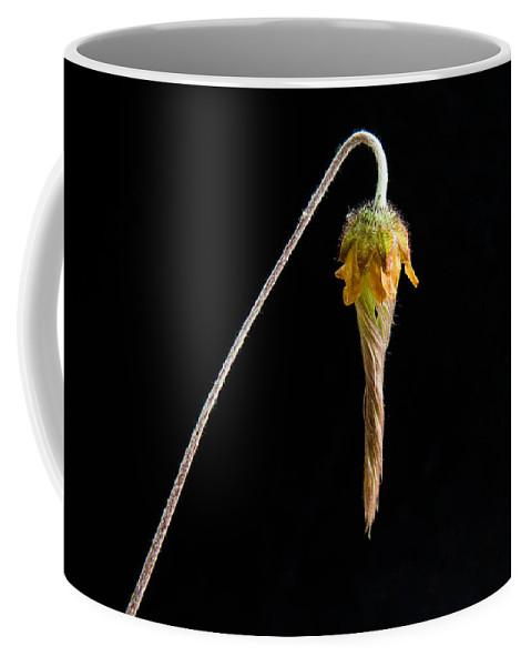 Alberta Coffee Mug featuring the photograph Prairie Smoke Nodding Blossom by Douglas Barnett