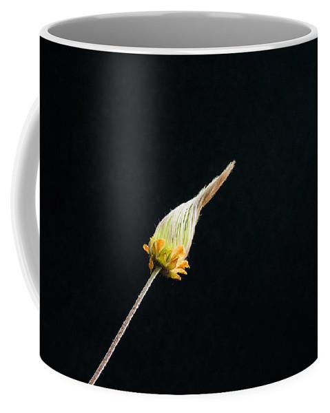 Alberta Coffee Mug featuring the photograph Prairie Smoke Twisted Bud by Douglas Barnett