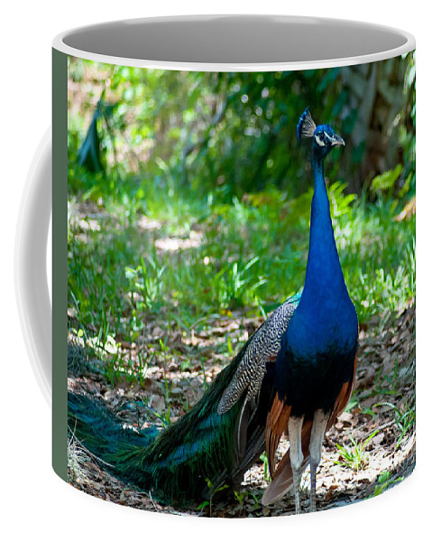 Peacock Coffee Mug featuring the photograph Prancing Peacock by Stephen Whalen