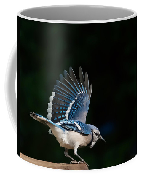 Birds Coffee Mug featuring the photograph Preening Blue Jay by Deb Breton