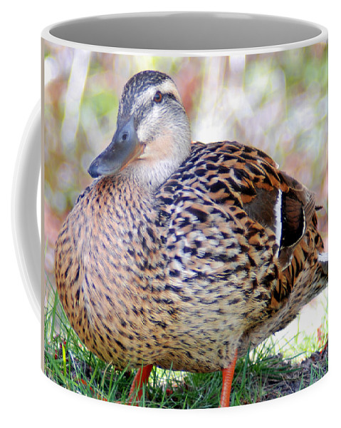 882b7c1d6f19d Optical Playground By Mp Ray Coffee Mug featuring the photograph Pregnant  Female Duck by Optical Playground