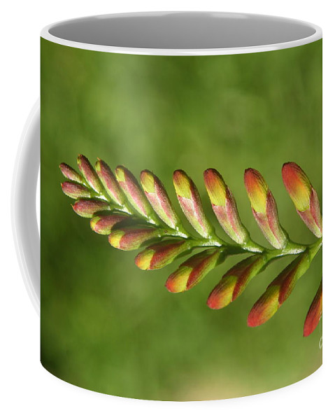 Flower Coffee Mug featuring the photograph Prehistoric Flower by Kenny Glotfelty