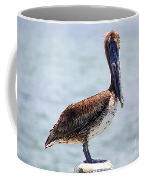 Pelican Coffee Mug featuring the photograph Pretty Gulf Pelican by Carol Groenen