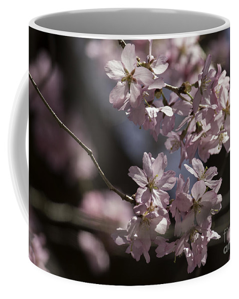 Cherry Blossom Coffee Mug featuring the photograph Pretty In Pink Blossom by Arlene Carmel