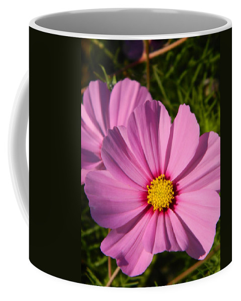Pink Coffee Mug featuring the photograph Pretty In Pink Cosmos by Nicki Bennett
