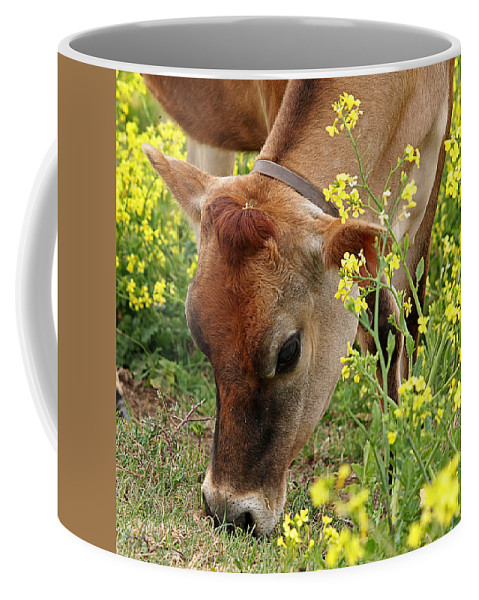 Jersey Cow Coffee Mug featuring the photograph Pretty Jersey Cow Square by Gill Billington
