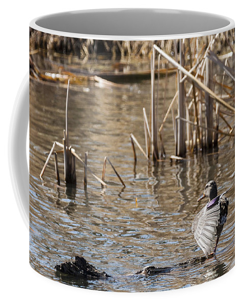 Spring Coffee Mug featuring the photograph Pretty Lady by Edward Peterson