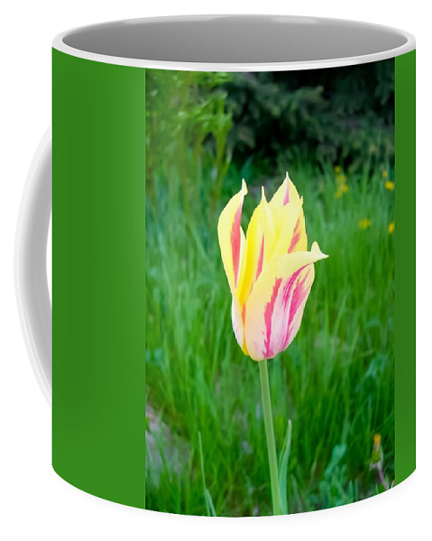 Pretty Pastel Tulip Coffee Mug featuring the photograph Pretty Pastel Tulip by Cynthia Woods