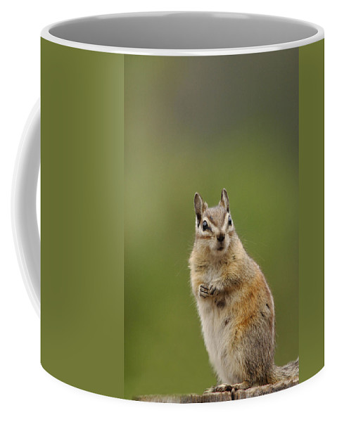 Squirrel Coffee Mug featuring the photograph Pretty Please by Donna Blackhall