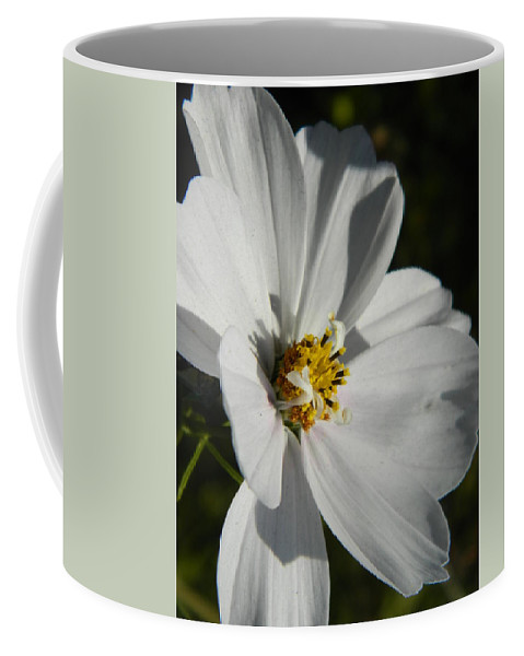 White Coffee Mug featuring the photograph Pretty White Cosmos by Nicki Bennett