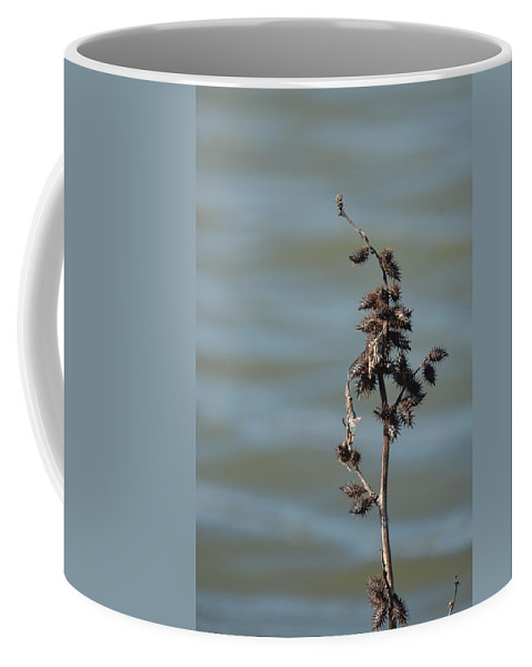 Prickly By Nature Coffee Mug featuring the photograph Prickly By Nature by Maria Urso