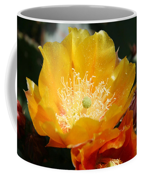 Prickly Pear Blossom Coffee Mug featuring the photograph Prickly Pear Blossom by Ellen Henneke