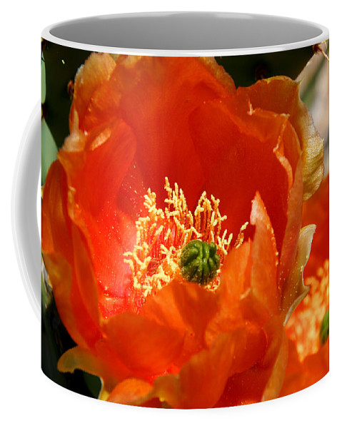 Cactus Coffee Mug featuring the photograph Prickly Pear In Bloom by Joe Kozlowski