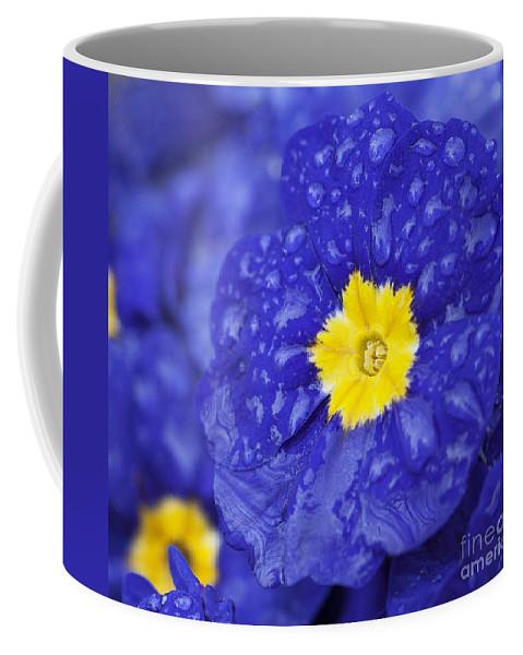 Primrose Coffee Mug featuring the photograph Primrose Raindrops by Emma England