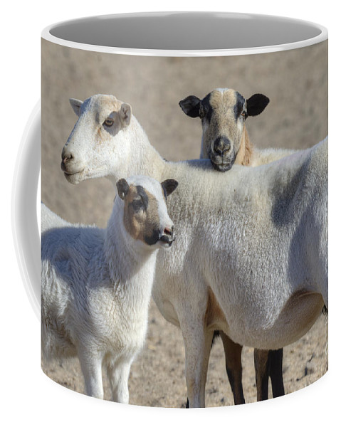 Sheep Coffee Mug featuring the photograph Professional Sheep by Dianne Phelps