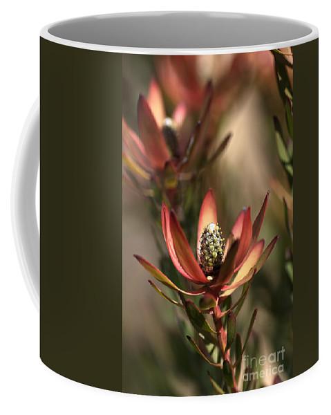 Protea Coffee Mug featuring the photograph Protea by Joy Watson