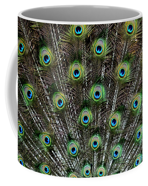 Peacock Coffee Mug featuring the photograph Proud Display by Eric Albright