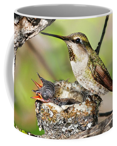 Humming Bird Coffee Mug featuring the photograph Proud Mom by Abram House