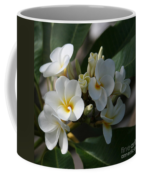 Aloha Coffee Mug featuring the photograph Pua Melia Na Puakea Onaona Tropical Plumeria by Sharon Mau