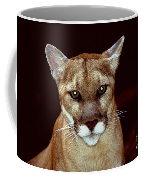 Lion Coffee Mug featuring the photograph Puma by Gary Gingrich Galleries