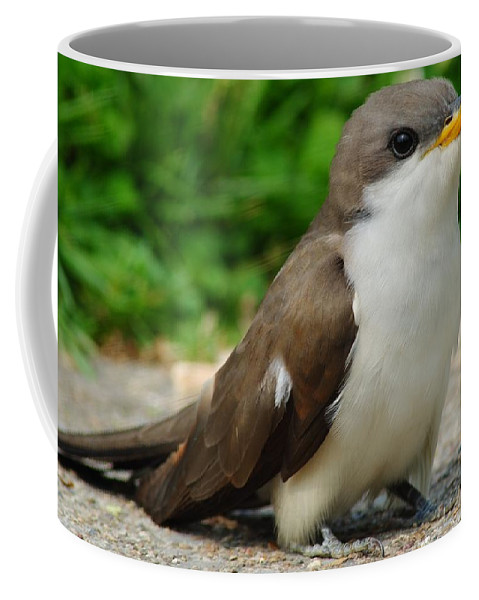 Puppy Coffee Mug featuring the photograph Puppy Dog Eyes by Frozen in Time Fine Art Photography