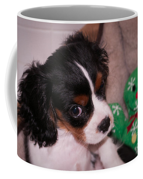Cavalier Coffee Mug featuring the photograph Puppy Look by Photos By Cassandra