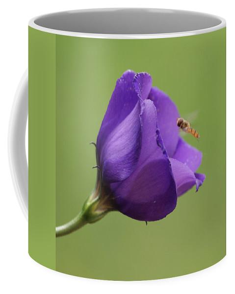 Purple Coffee Mug featuring the photograph Purple 4 by Carol Lynch