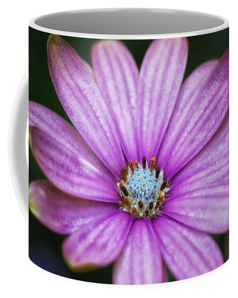 Color Coffee Mug featuring the photograph Purple African Daisy by Eti Reid