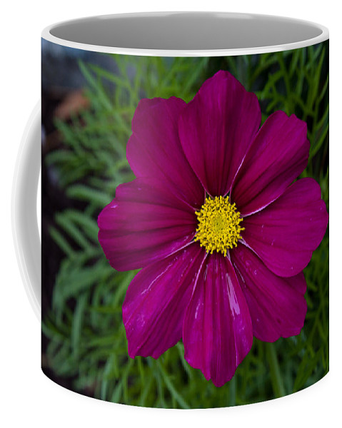 Purple Coffee Mug featuring the photograph Purple And Yellow Brilliance by John Daly