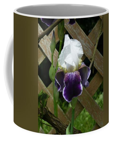 Iris Coffee Mug featuring the photograph Purple Bearded Iris by Nicki Bennett