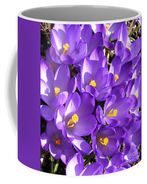 Purple Crocus Coffee Mug featuring the photograph Purple Crocus Spring Welcome by Barbara Griffin