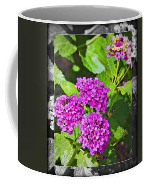 Purple Flowers Coffee Mug featuring the photograph Purple Flowers A by Walter Herrit