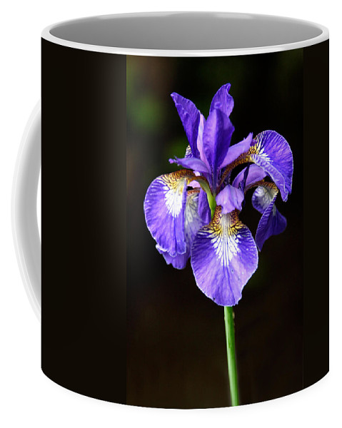 3scape Coffee Mug featuring the photograph Purple Iris by Adam Romanowicz