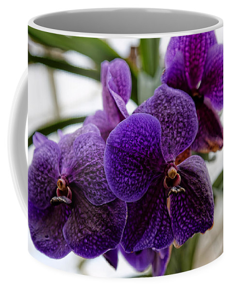 Purple Orchids Coffee Mug featuring the photograph Purple Orchids by Scott Hill