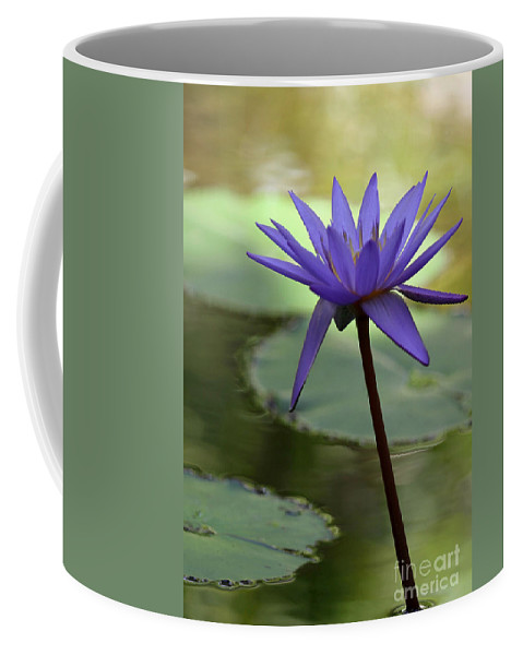 Landscape Coffee Mug featuring the photograph Purple Water Lily In The Shade by Sabrina L Ryan