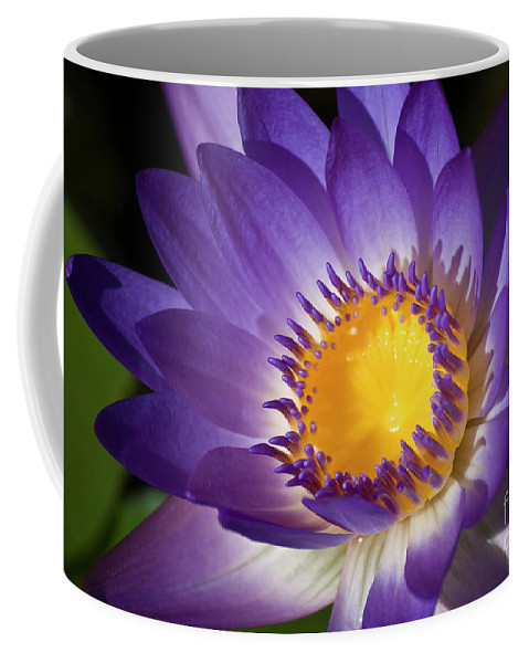 Flowers Coffee Mug featuring the photograph Purple Waterlily by Diego Re