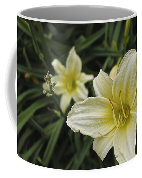 Flowers Coffee Mug featuring the photograph Qcpg 13-006 by Mario MJ Perron