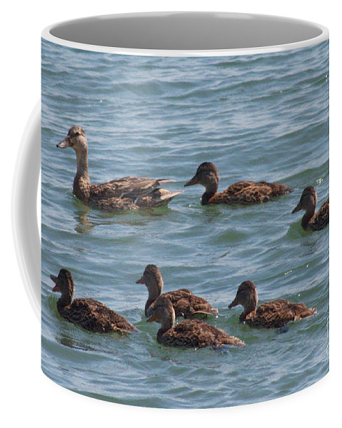 Ducks Coffee Mug featuring the photograph Quackers by William Norton