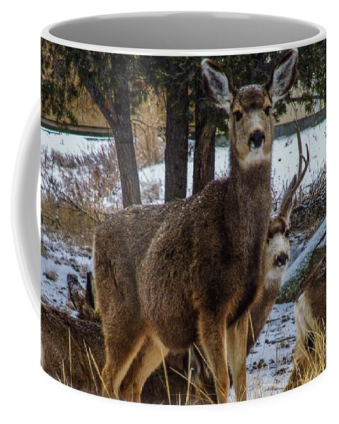 Deer Coffee Mug featuring the photograph Queen Of The Herd by Jesse Post