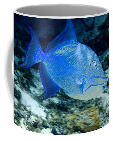 Queen Triggerfish Coffee Mug featuring the photograph Queen Triggerfish by Jim Murphy